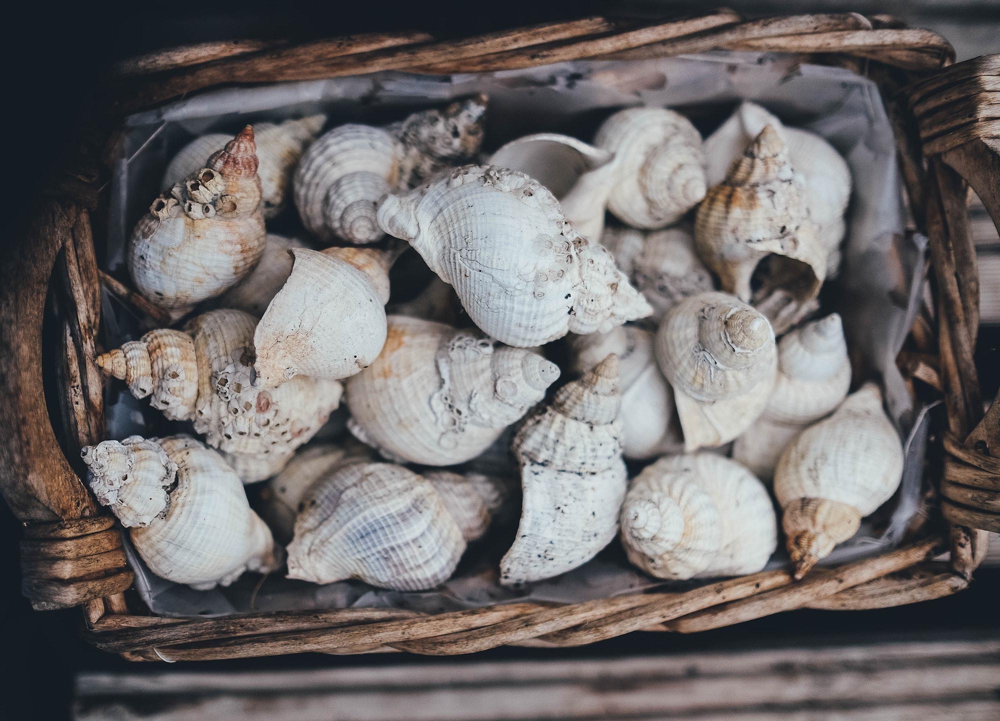 Muscheln als erstes Zahlungsmittel